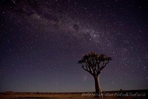Night sky in the desert