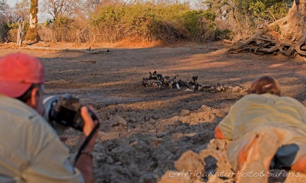 Photo safaris in Mana Pools