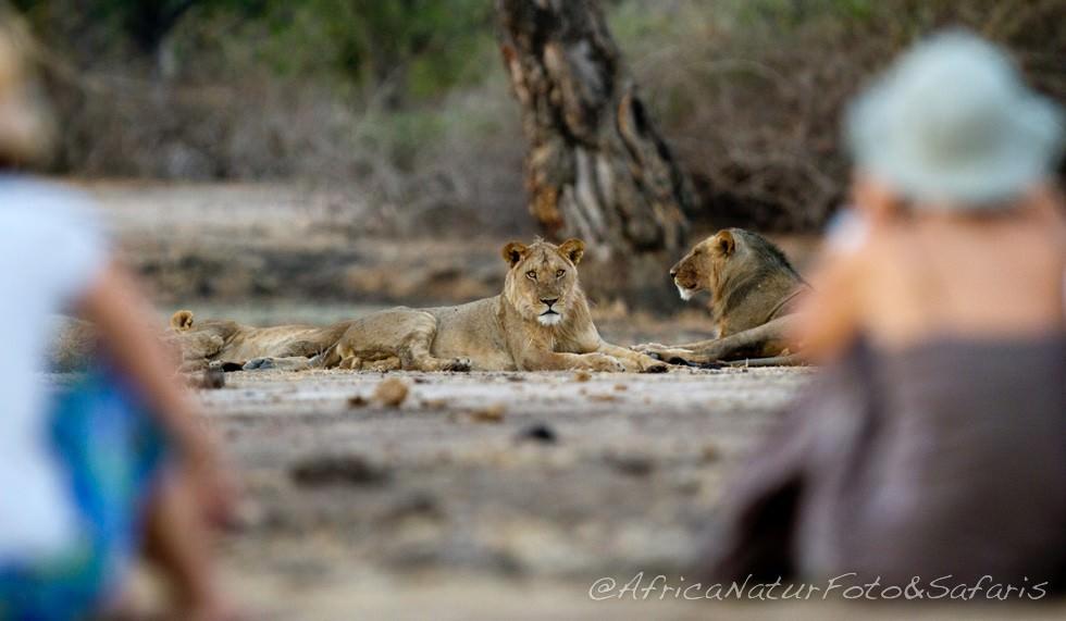 Walking safari - Mana Pools