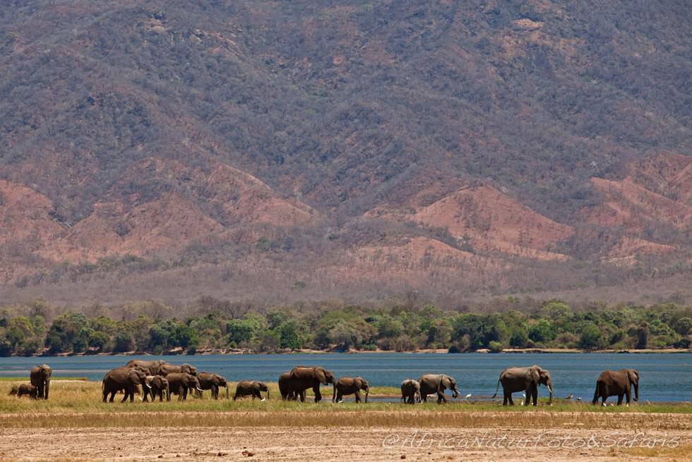 Zambesi Landscape