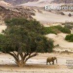 Elefanti del deserto