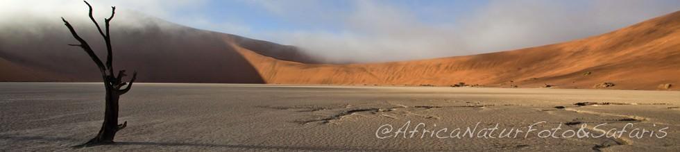Deadvlei, Namibia 7