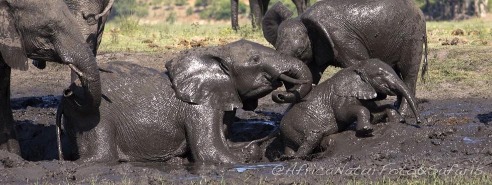 Bagno elefanti86