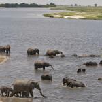 Chobe river 34