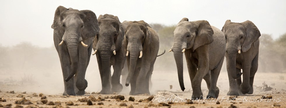 Corsa elefanti 75