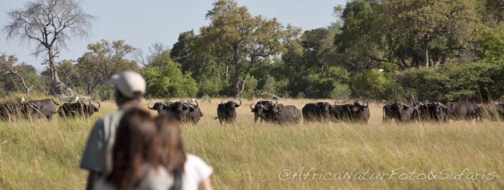 Safari piedi 74