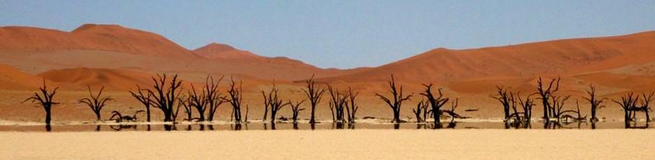 alberi del deserto