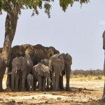 Elefanti a riposo 86