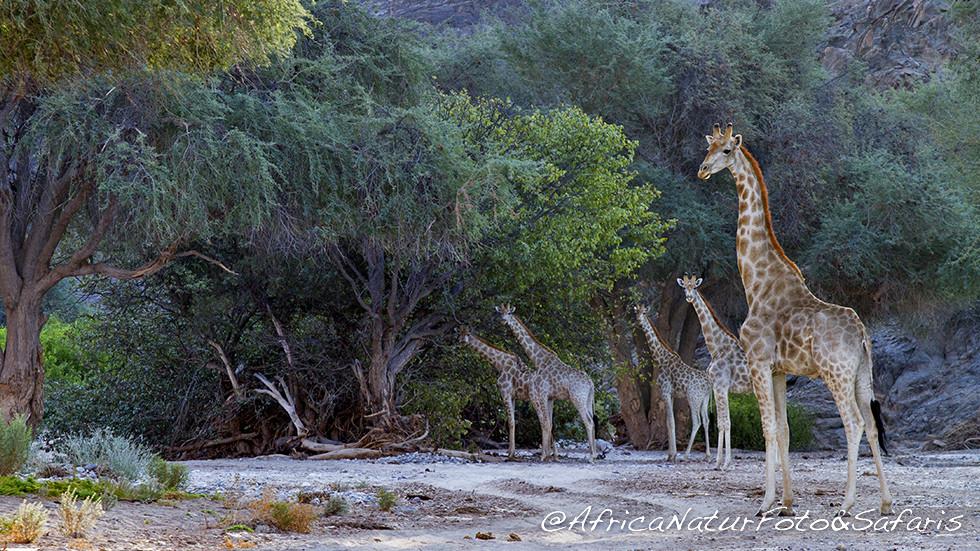 Immagini namibia fotografie di africa naturfoto - Letto di un fiume in secca ...